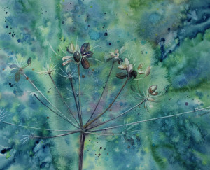 Cowparsley